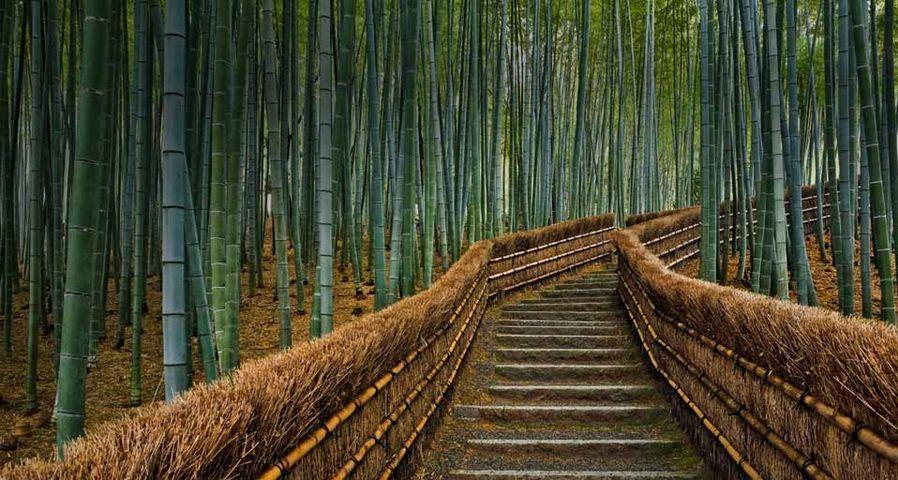 Spazierweg mit Bambusgeländer zum Adashino Nembutsu-ji Tempel in Kyoto, Japan – Rudy Sulgan/Corbis ©