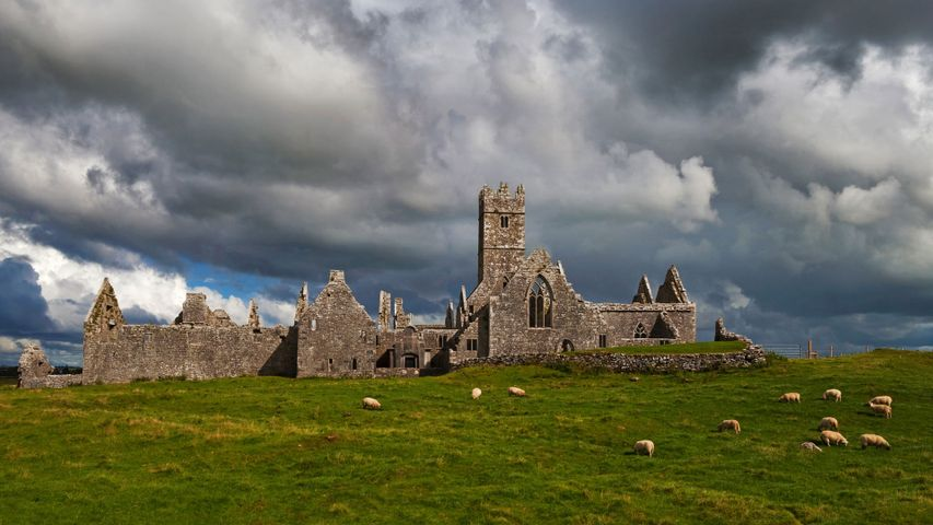 Das Kloster Ross Errilly, County Galway, Irland