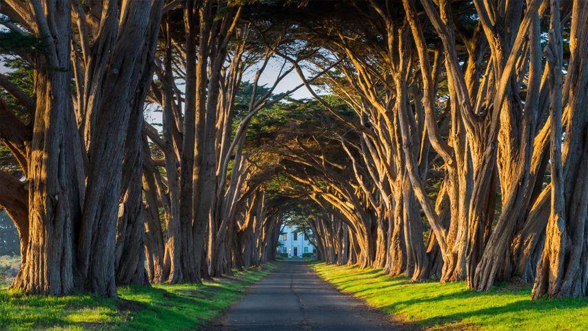 Zypressen im Küstenschutzgebiet Point Reyes National Seashore, Kalifornien, USA