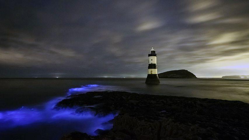 Meeresleuchten am Leuchtturm Trwyn Du auf der Insel Anglesey, Wales, Großbritannien