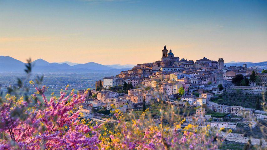 Mandelblüte bei Trevi, Provinz Perugia, Umbrien, Italien