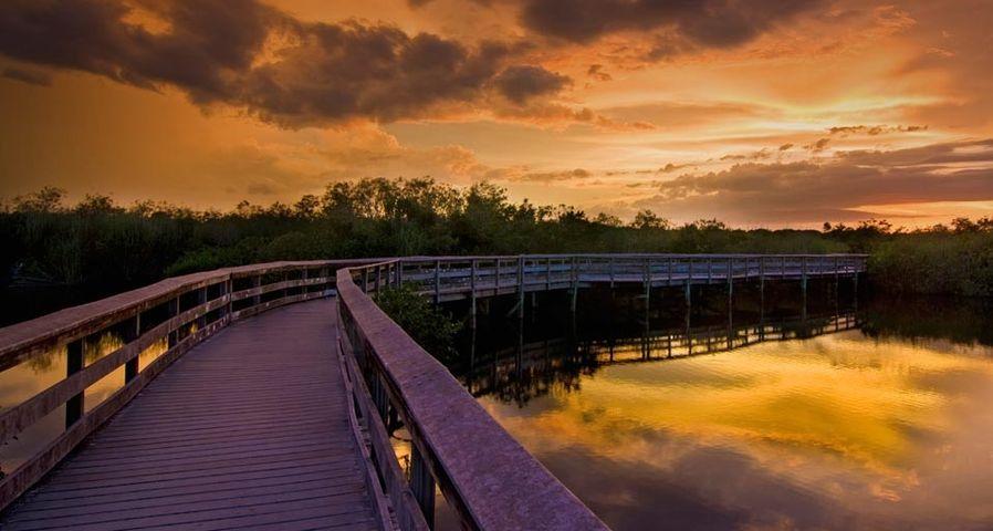 Ein Stück des Anhinga Trails im Everglades Nationalpark, Florida – SIME/eStock ©