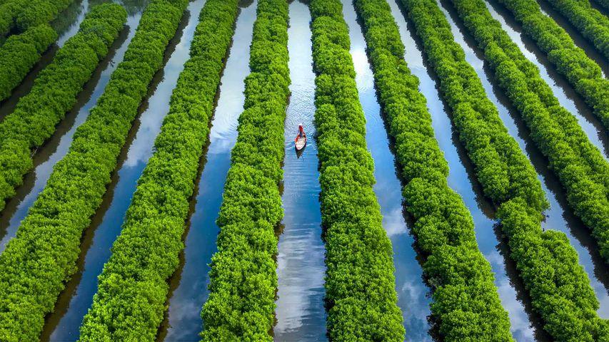 Bàu-Cá-Cái-Mangrovenwald in der Provinz Quảng Ngãi, Vietnam