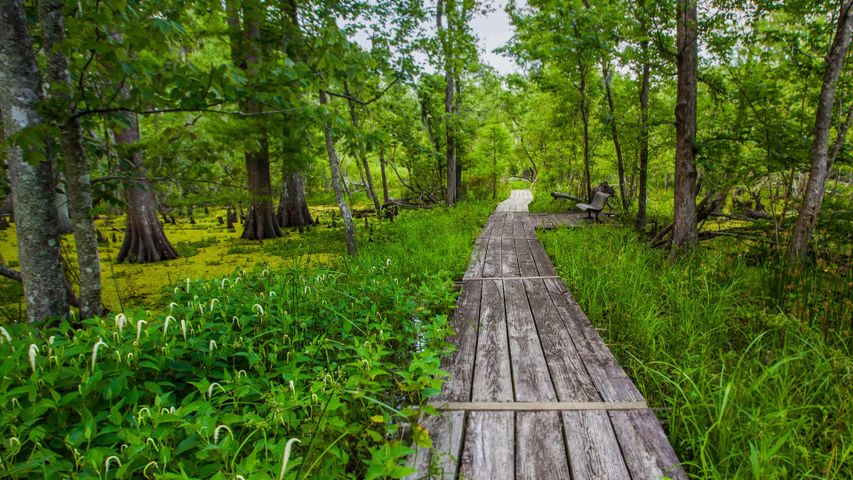 Barataria Trail im Jean Lafitte National Historical Park, Louisiana, USA