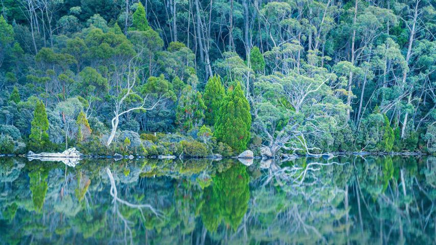 Lake Dobson im Mount-Field-Nationalpark, Tasmanien, Australien