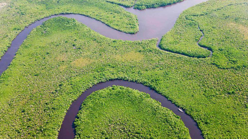 Luftbild des Regenwalds und des Daintree River, Daintree-Nationalpark, Australien