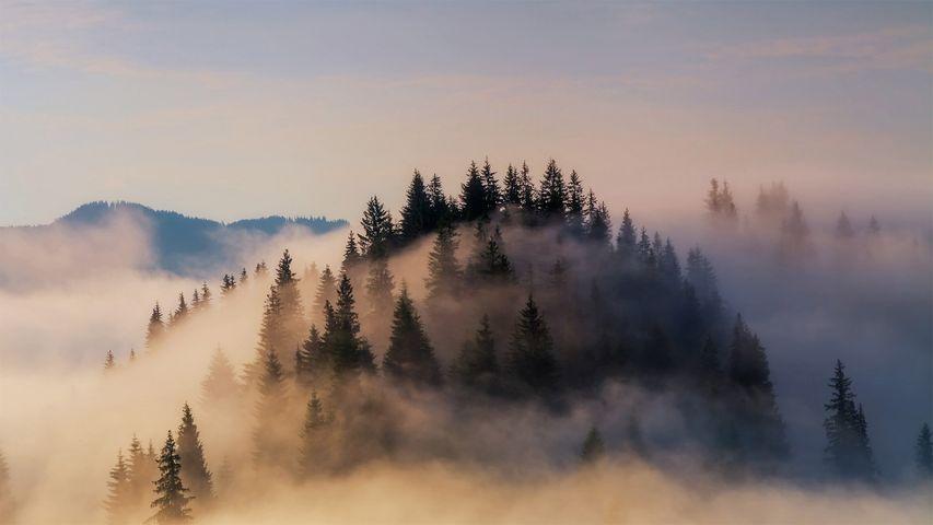 Nebelschleier in den Bayerischen Alpen, Deutschland