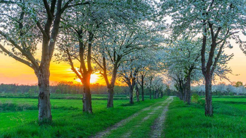 Bäume im Frühling in der Nähe von Berlin, Deutschland