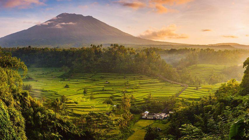 Reisfelder im Sidemen Valley mit dem Vulkan Agung im Hintergrund, Bali, Indonesien