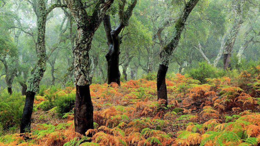Naturpark Los Alcornocales, Cortes de la Frontera, Provinz Málaga, Spanien