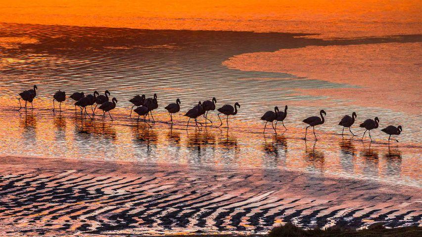 Flamingos im Nationalpark Reserva Nacional de Fauna Andina Eduardo Avaroa, Bolivien