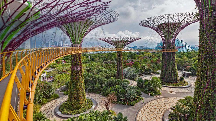 Supertrees im Parkgelände Gardens by the Bay, Singapur